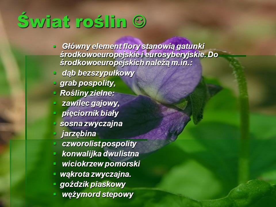 Świat roślin  dąb bezszypułkowy grab pospolity, Rośliny zielne: