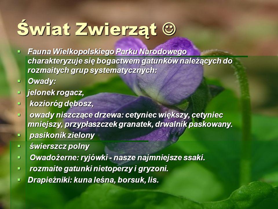 Świat Zwierząt  Fauna Wielkopolskiego Parku Narodowego charakteryzuje się bogactwem gatunków należących do rozmaitych grup systematycznych: