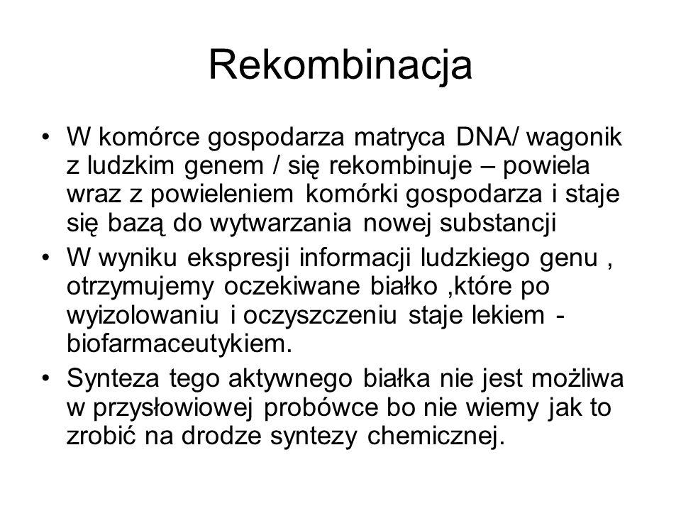 Rekombinacja