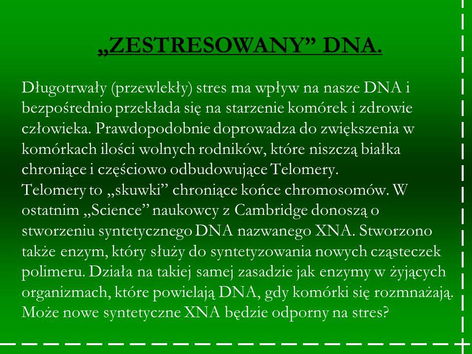 """ZESTRESOWANY DNA."