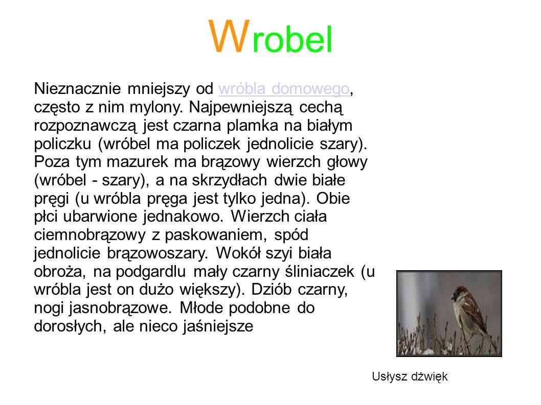 Wrobel