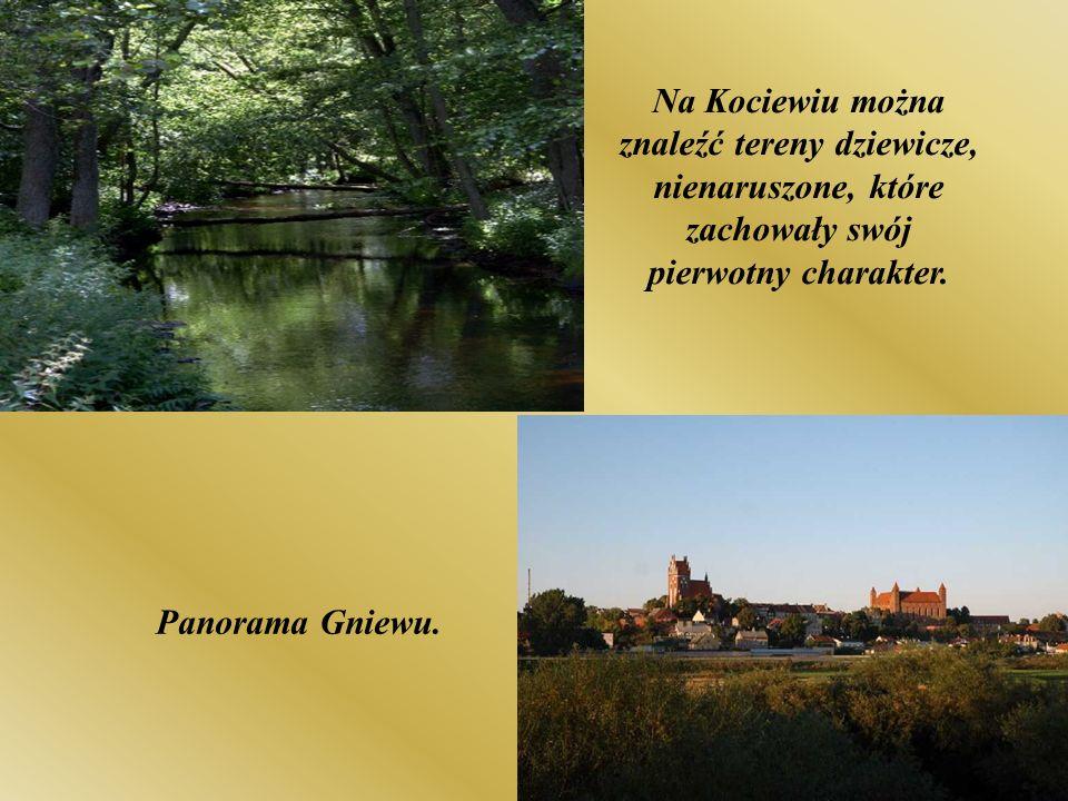 Na Kociewiu można znaleźć tereny dziewicze, nienaruszone, które zachowały swój pierwotny charakter.