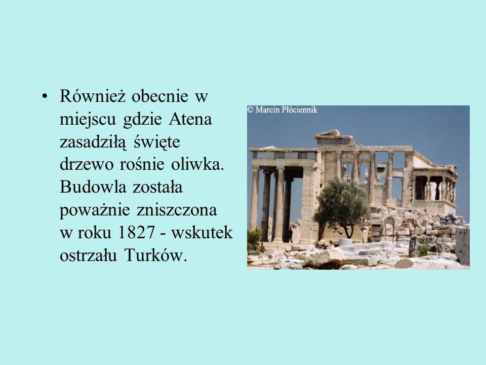 Również obecnie w miejscu gdzie Atena zasadziłą święte drzewo rośnie oliwka.