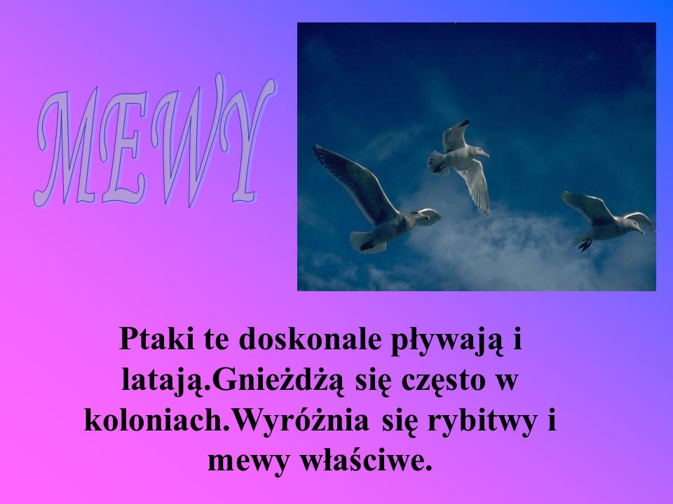 MEWYPtaki te doskonale pływają i latają.Gnieżdżą się często w koloniach.Wyróżnia się rybitwy i mewy właściwe.