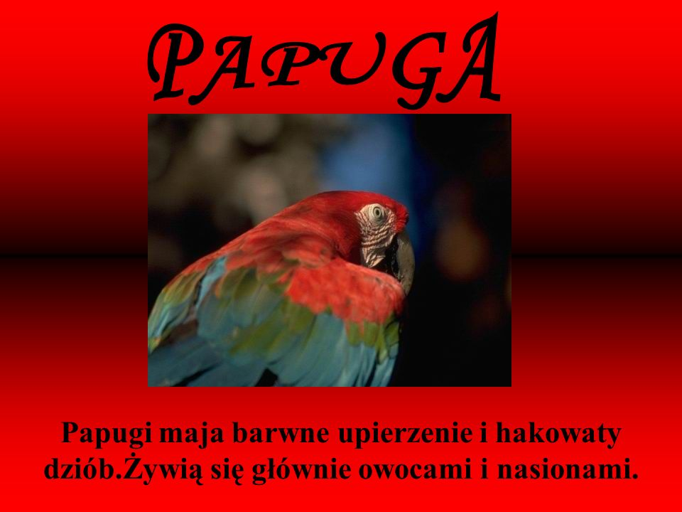 PAPUGA Papugi maja barwne upierzenie i hakowaty dziób.Żywią się głównie owocami i nasionami.