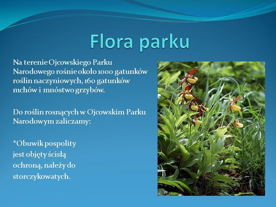 Flora parkuNa terenie Ojcowskiego Parku Narodowego rośnie około 1000 gatunków roślin naczyniowych, 160 gatunków mchów i mnóstwo grzybów.