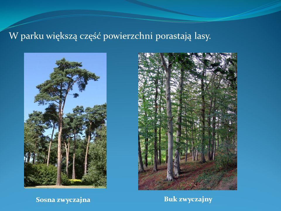 W parku większą część powierzchni porastają lasy.