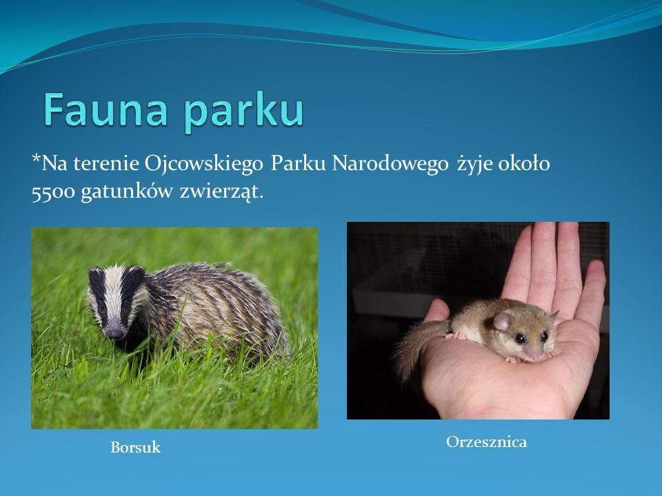 Fauna parku *Na terenie Ojcowskiego Parku Narodowego żyje około 5500 gatunków zwierząt. Orzesznica.