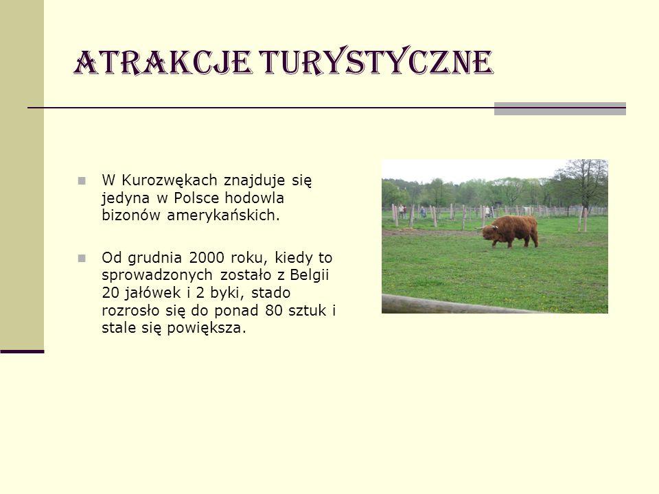 Atrakcje turystyczne W Kurozwękach znajduje się jedyna w Polsce hodowla bizonów amerykańskich.