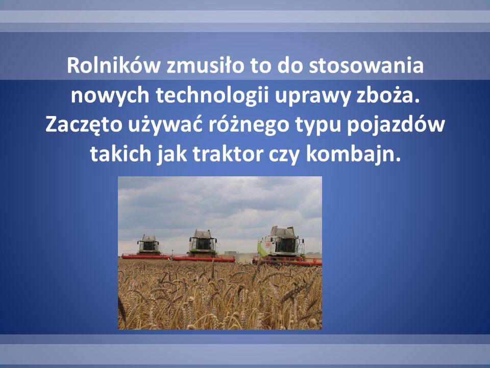 Rolników zmusiło to do stosowania nowych technologii uprawy zboża