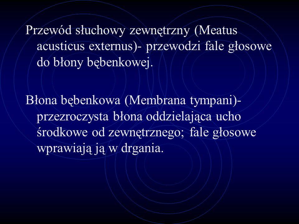 Przewód słuchowy zewnętrzny (Meatus acusticus externus)- przewodzi fale głosowe do błony bębenkowej.