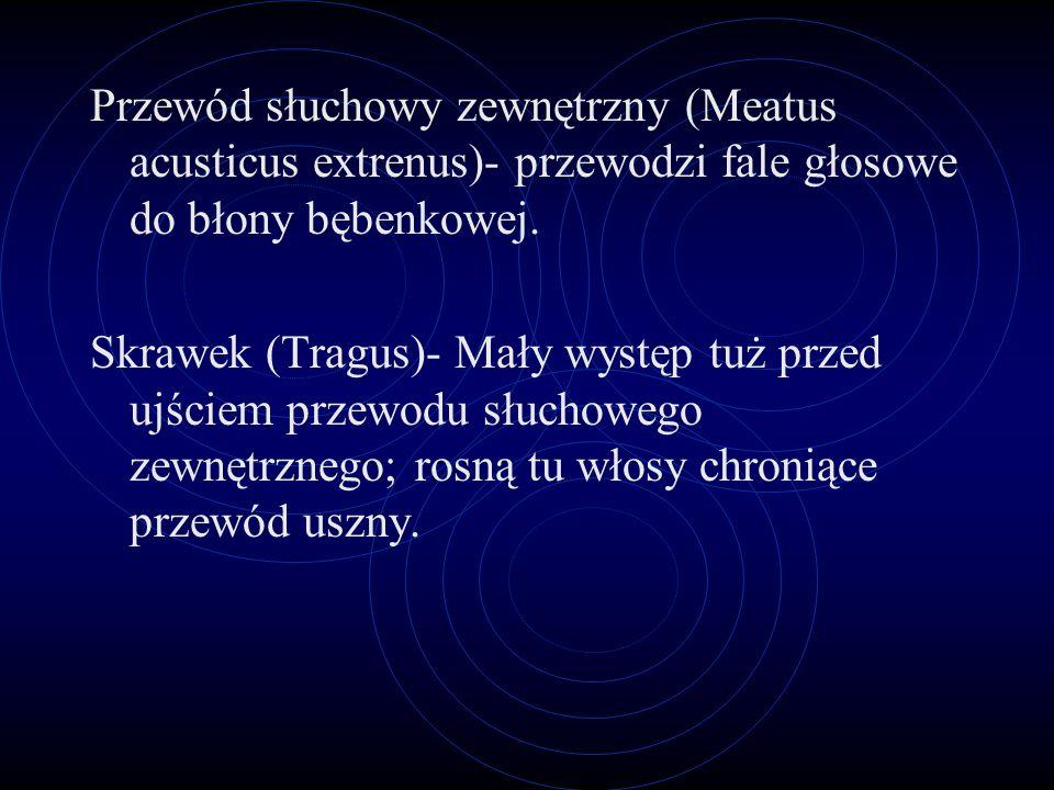 Przewód słuchowy zewnętrzny (Meatus acusticus extrenus)- przewodzi fale głosowe do błony bębenkowej.