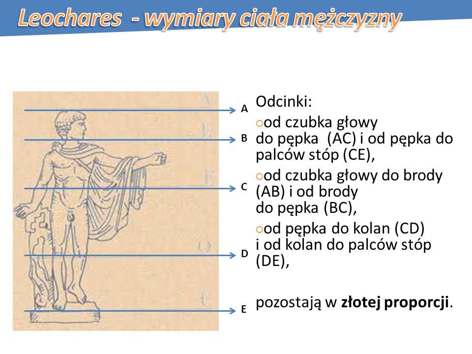 Leochares - wymiary ciała mężczyzny