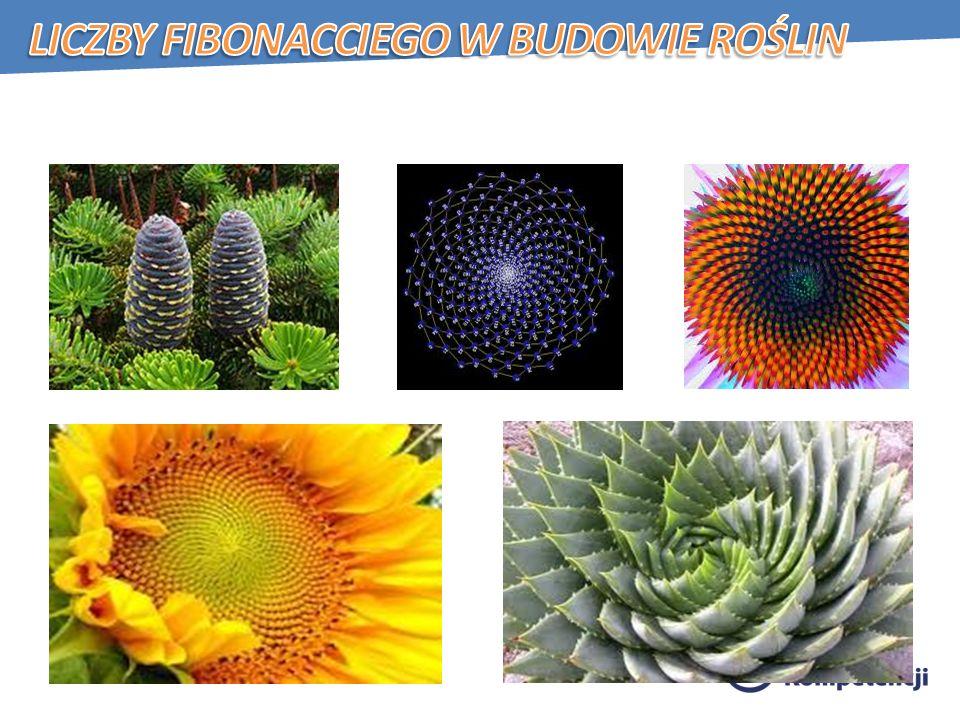 Liczby Fibonacciego w budowie roślin