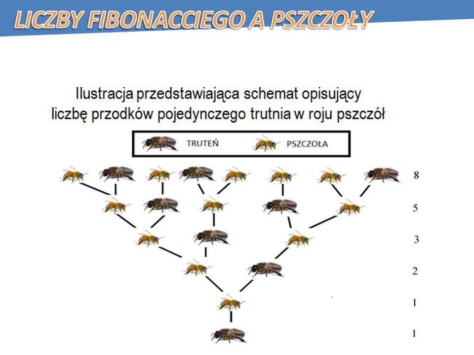 Liczby Fibonacciego a pszczoły
