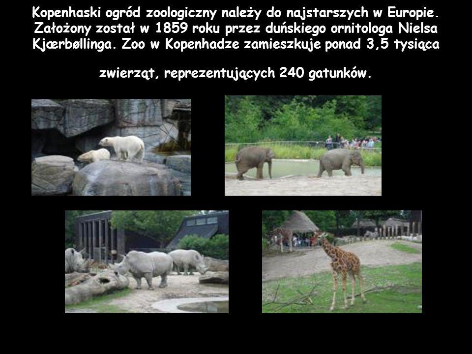 Kopenhaski ogród zoologiczny należy do najstarszych w Europie