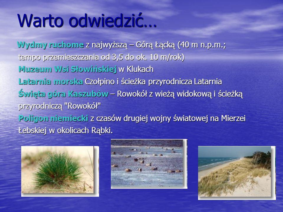 Warto odwiedzić… Wydmy ruchome z najwyższą – Górą Łącką (40 m n.p.m.;