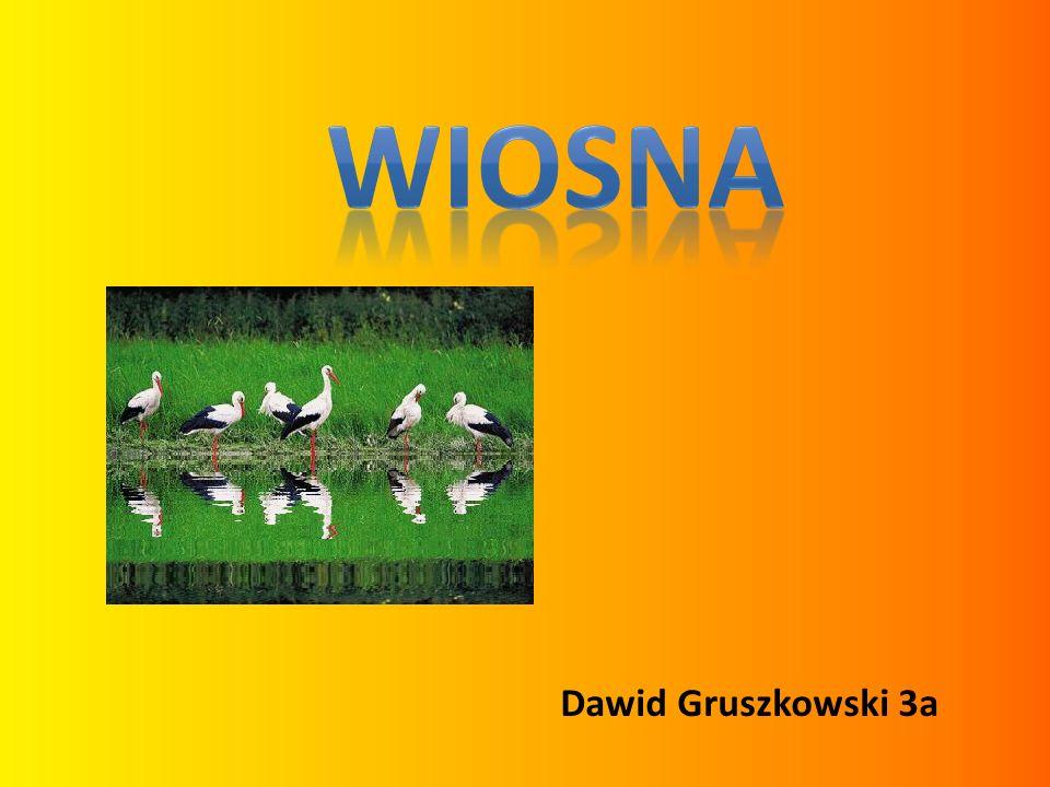 WIOSNA Dawid Gruszkowski 3a