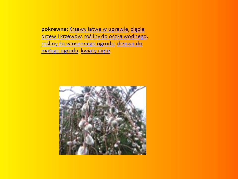 pokrewne: Krzewy łatwe w uprawie, cięcie drzew i krzewów, rośliny do oczka wodnego, rośliny do wiosennego ogrodu, drzewa do małego ogrodu, kwiaty cięte.