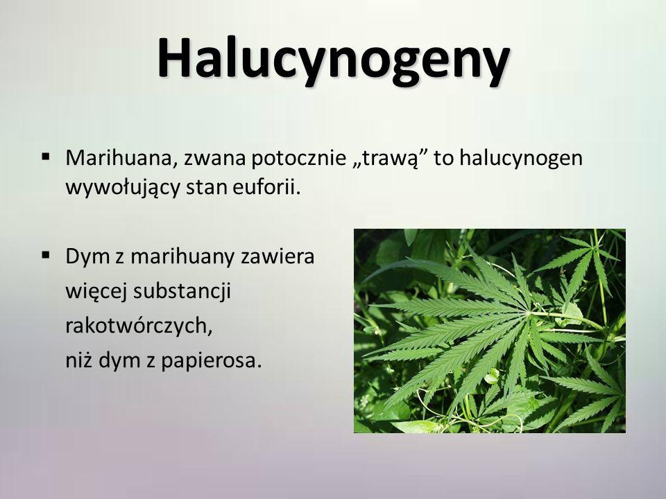 """Halucynogeny Marihuana, zwana potocznie """"trawą to halucynogen wywołujący stan euforii. Dym z marihuany zawiera."""