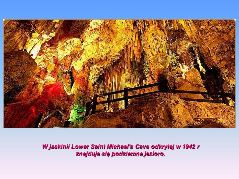 W jaskinii Lower Saint Michael s Cave odkrytej w 1942 r