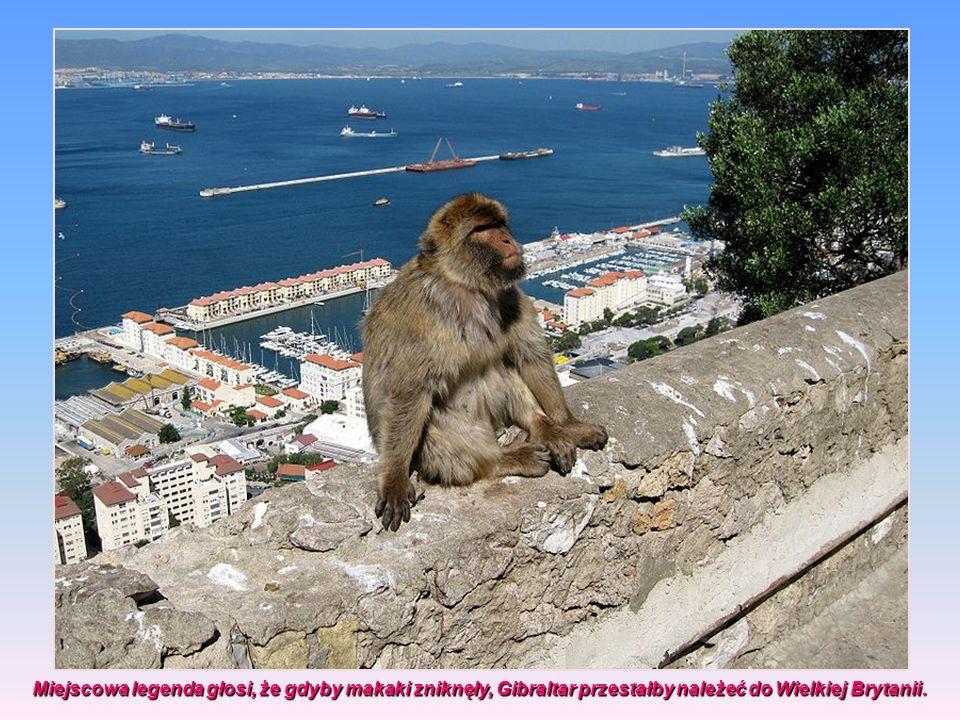 Miejscowa legenda głosi, że gdyby makaki zniknęły, Gibraltar przestałby należeć do Wielkiej Brytanii.
