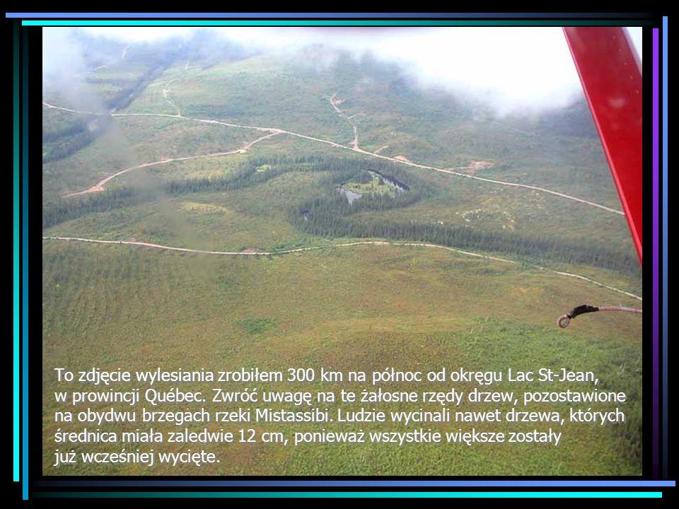 To zdjęcie wylesiania zrobiłem 300 km na północ od okręgu Lac St-Jean, w prowincji Québec.