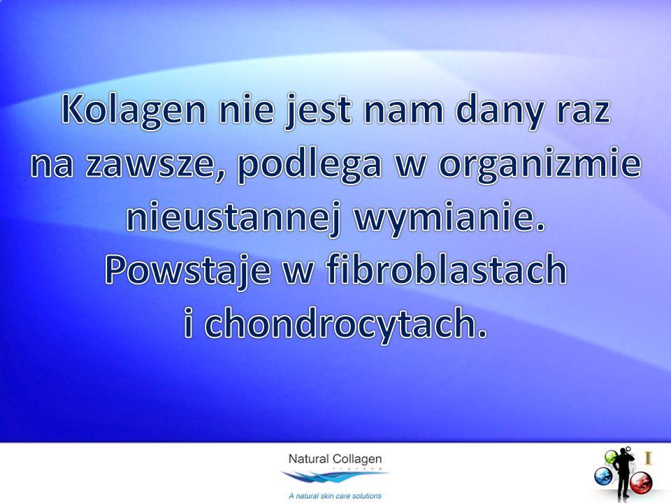 Kolagen nie jest nam dany raz na zawsze, podlega w organizmie nieustannej wymianie. Powstaje w fibroblastach i chondrocytach.