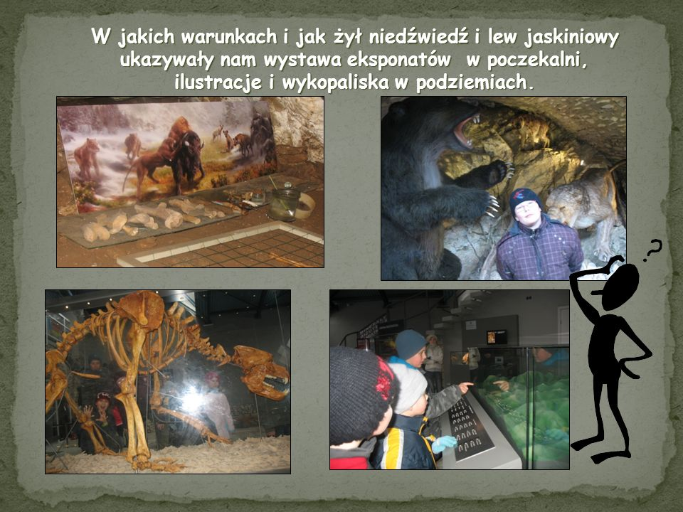 W jakich warunkach i jak żył niedźwiedź i lew jaskiniowy ukazywały nam wystawa eksponatów w poczekalni, ilustracje i wykopaliska w podziemiach.