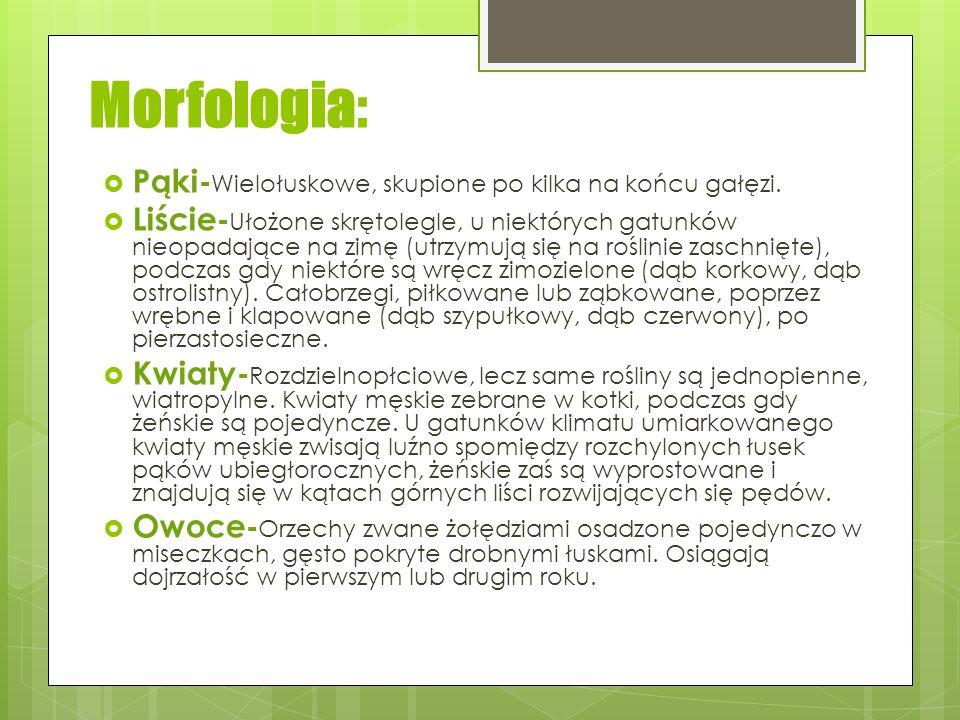 Morfologia: Pąki-Wielołuskowe, skupione po kilka na końcu gałęzi.