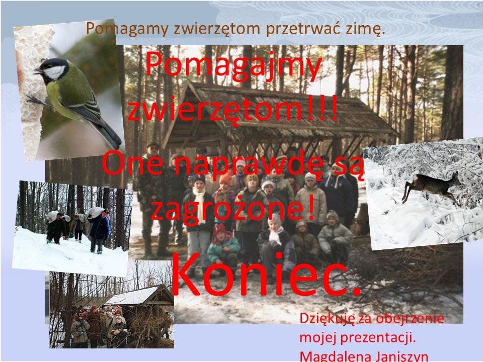 Pomagamy zwierzętom przetrwać zimę.