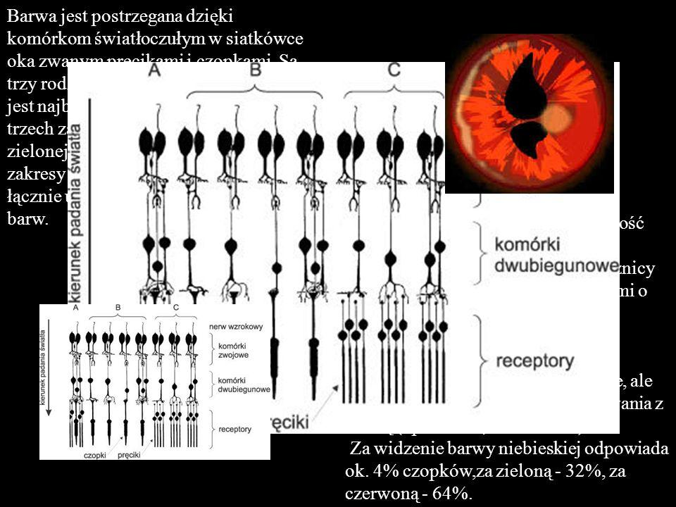 Barwa jest postrzegana dzięki komórkom światłoczułym w siatkówce oka zwanym pręcikami i czopkami. Są trzy rodzaje czopków, a każdy z nich jest najbardziej wrażliwy na jeden z trzech zakresów barw - niebieskiej, zielonej, lub czerwonej (przy czym zakresy te zachodzą na siebie), co łącznie umożliwia widzenie wszystkich barw.