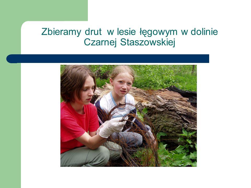 Zbieramy drut w lesie łęgowym w dolinie Czarnej Staszowskiej