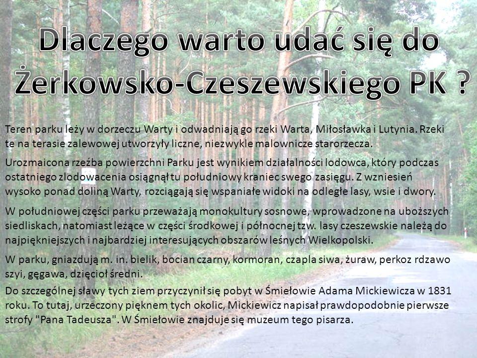 Dlaczego warto udać się do Żerkowsko-Czeszewskiego PK