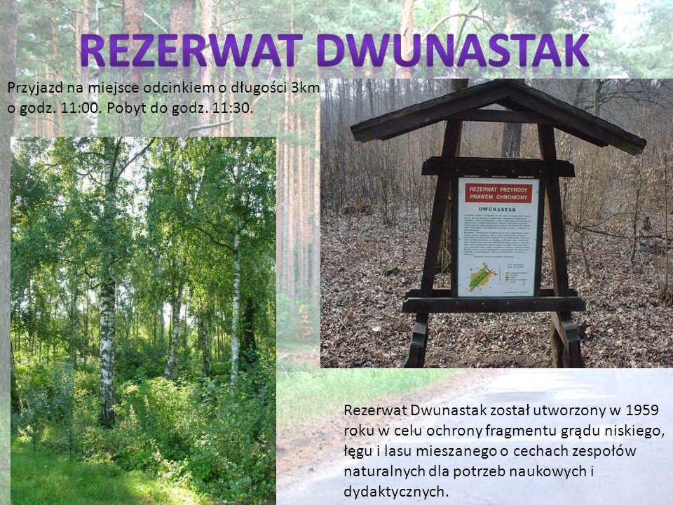 Rezerwat Dwunastak Przyjazd na miejsce odcinkiem o długości 3km o godz. 11:00. Pobyt do godz. 11:30.