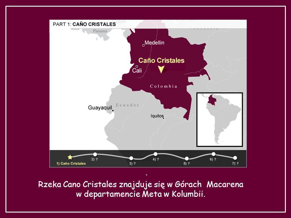 Rzeka Cano Cristales znajduje się w Górach Macarena
