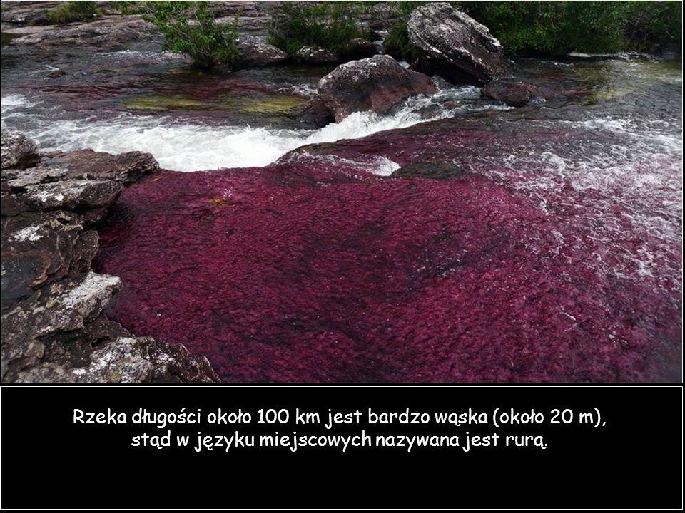 Rzeka długości około 100 km jest bardzo wąska (około 20 m), stąd w języku miejscowych nazywana jest rurą.