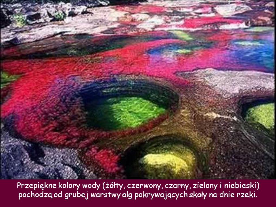 . Przepiękne kolory wody (żółty, czerwony, czarny, zielony i niebieski) pochodzą od grubej warstwy alg pokrywających skały na dnie rzeki.