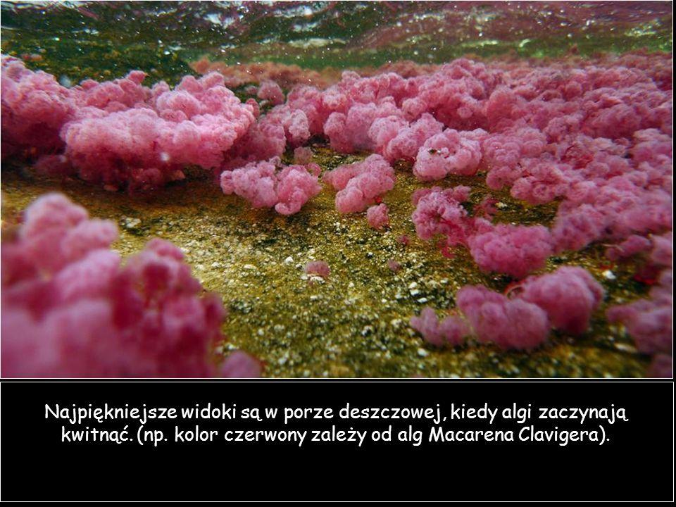 Najpiękniejsze widoki są w porze deszczowej, kiedy algi zaczynają kwitnąć.