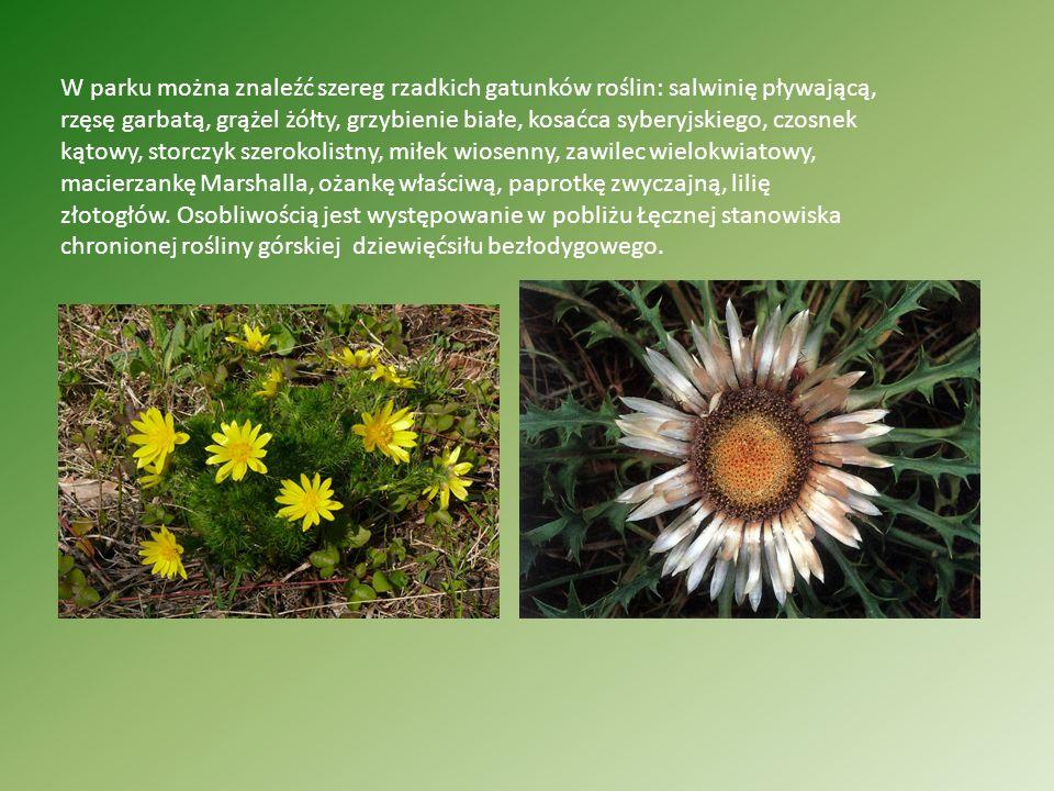 W parku można znaleźć szereg rzadkich gatunków roślin: salwinię pływającą, rzęsę garbatą, grążel żółty, grzybienie białe, kosaćca syberyjskiego, czosnek kątowy, storczyk szerokolistny, miłek wiosenny, zawilec wielokwiatowy, macierzankę Marshalla, ożankę właściwą, paprotkę zwyczajną, lilię złotogłów.