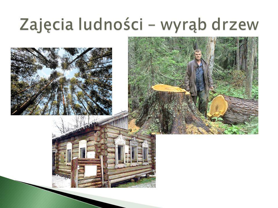 Zajęcia ludności – wyrąb drzew
