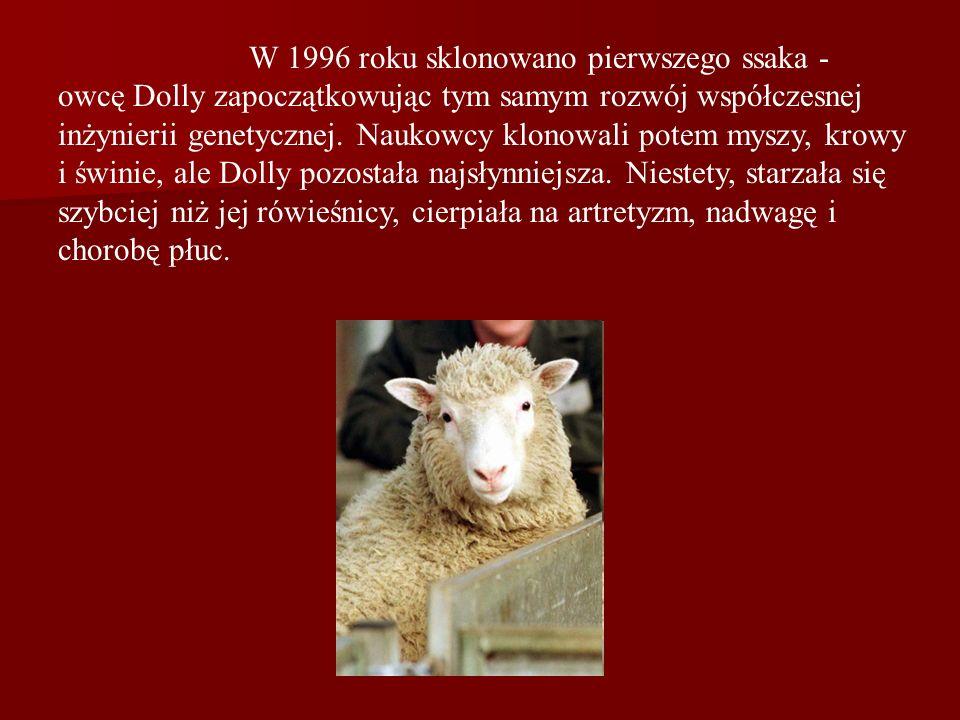W 1996 roku sklonowano pierwszego ssaka - owcę Dolly zapoczątkowując tym samym rozwój współczesnej inżynierii genetycznej.
