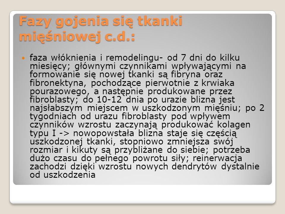 Fazy gojenia się tkanki mięśniowej c.d.:
