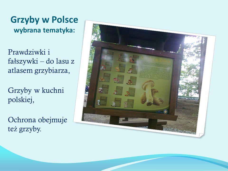Grzyby w Polsce wybrana tematyka: