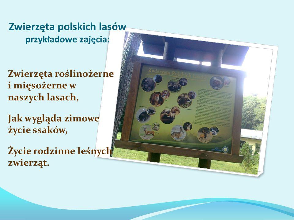 Zwierzęta polskich lasów przykładowe zajęcia: