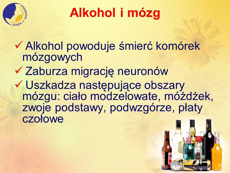 Alkohol i mózg Alkohol powoduje śmierć komórek mózgowych