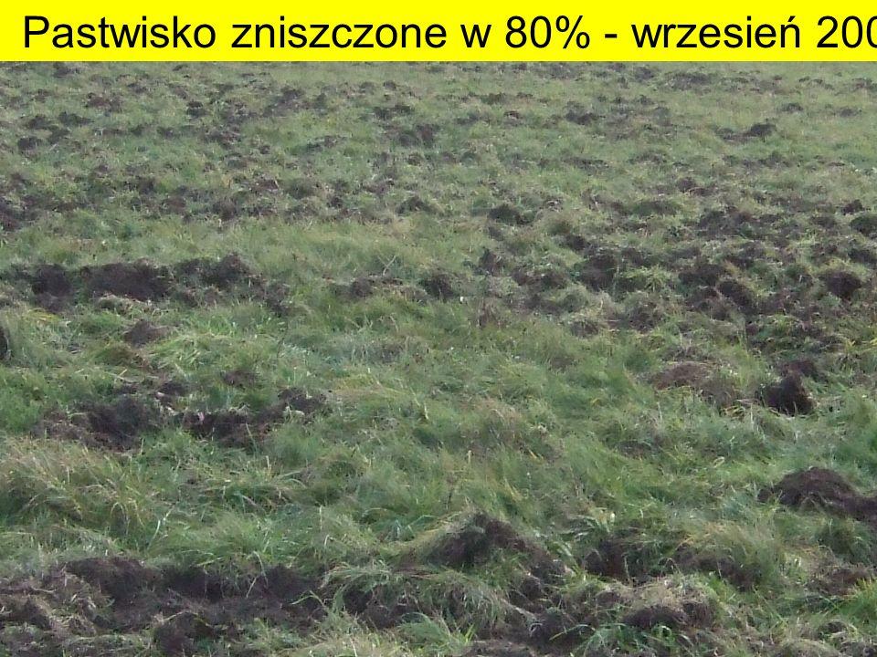Pastwisko zniszczone w 80% - wrzesień 2007