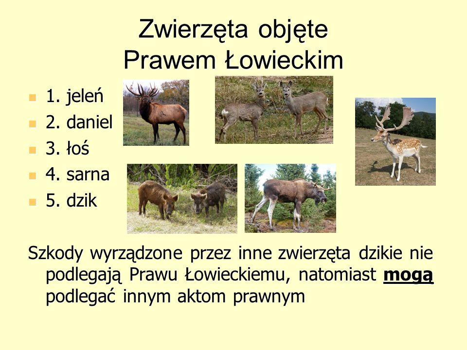 Zwierzęta objęte Prawem Łowieckim