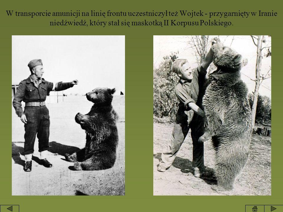 W transporcie amunicji na linię frontu uczestniczył też Wojtek - przygarnięty w Iranie niedźwiedź, który stał się maskotką II Korpusu Polskiego.