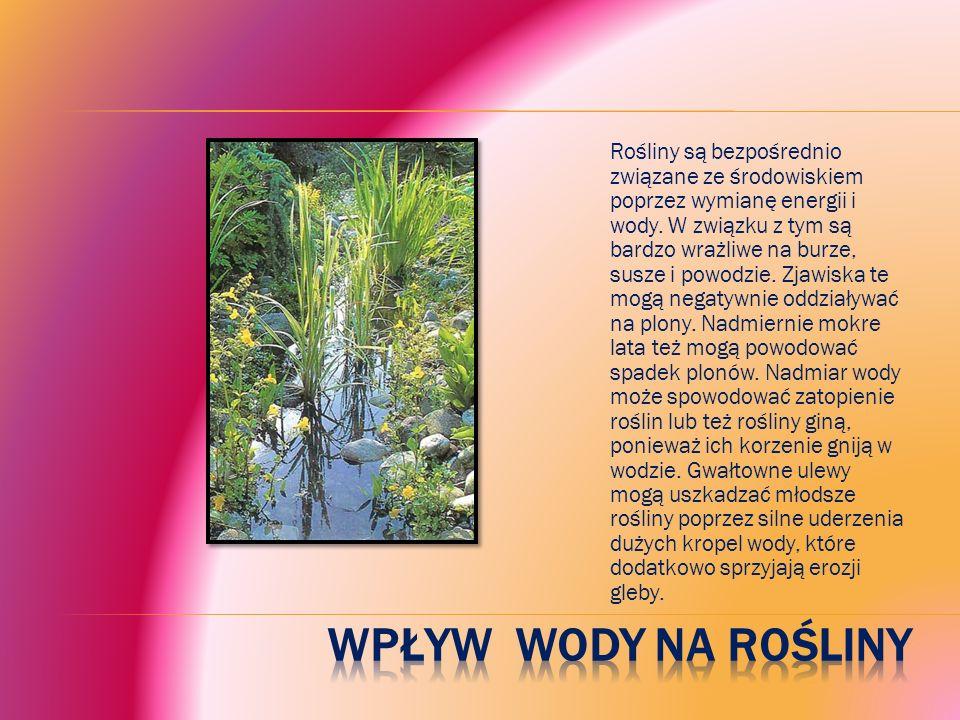 Rośliny są bezpośrednio związane ze środowiskiem poprzez wymianę energii i wody. W związku z tym są bardzo wrażliwe na burze, susze i powodzie. Zjawiska te mogą negatywnie oddziaływać na plony. Nadmiernie mokre lata też mogą powodować spadek plonów. Nadmiar wody może spowodować zatopienie roślin lub też rośliny giną, ponieważ ich korzenie gniją w wodzie. Gwałtowne ulewy mogą uszkadzać młodsze rośliny poprzez silne uderzenia dużych kropel wody, które dodatkowo sprzyjają erozji gleby.